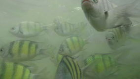 Gopro,swimming in phi phi island stock video footage