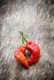gorąca chilies czerwień Fotografia Royalty Free