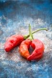 gorąca chilies czerwień Obrazy Stock