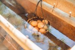 Gorąca naturalna podziemna termiczna woda używa gotować się kurczaków jajka w niektóre powulkanicznej aktywności terenie Fotografia Stock