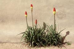 gorąca rośliien grzebaka czerwień Obrazy Royalty Free