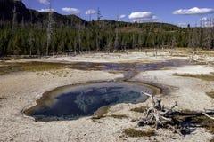 Gorąca wiosna w Yellowstone N P zdjęcia stock