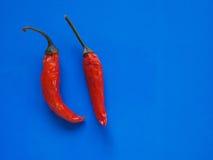 Gorącego chili pieprzu warzywa nad błękitem z kopii przestrzenią Obrazy Royalty Free