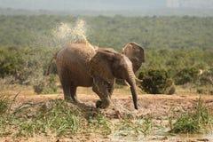 gorący afrykański słoń Zdjęcia Stock