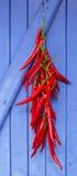 Gorący chili pieprze wiesza na błękitnym drzwi Obraz Stock