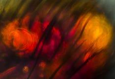 Gorący czerwieni i pomarańcze abstrakcjonistyczny micrograph pszczoła rozdziela Fotografia Stock