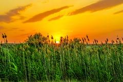 Gorący i ciepli kolory i cienie piękni krajobrazy Rosja w Rostov regionie Lokalni pola kwitnący żółci słoneczniki, obrazy royalty free