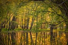 Gorący jesień kolory Zdjęcia Stock