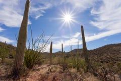 Gorący słońce nad Saguaro NP blisko Tucson Arizona USA Zdjęcia Stock