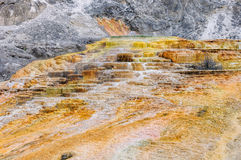 gorący zwany syberyjskim ekspresem skacze park narodowy Yellowstone obraz stock
