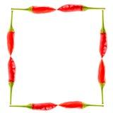 Gorąca chili pieprzy obrazka rama Obrazy Royalty Free