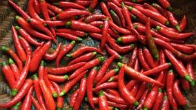 gorąca chillies czerwone. Zdjęcia Royalty Free