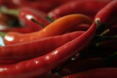gorąca czerwone chili Obraz Royalty Free