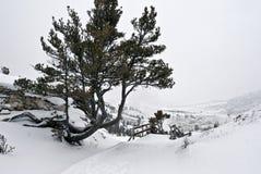 gorąca mamuta np wiosna zima Yellowstone Obrazy Stock