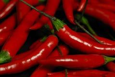 gorące chillies Zdjęcie Royalty Free