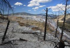 gorące mamuta np wiosna Yellowstone Zdjęcie Royalty Free