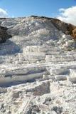gorące mamuta np wiosny tarasowy Yellowstone Zdjęcie Royalty Free