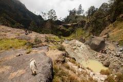 Gorące wiosny przy góry Rinjani wulkanem, Lombok, Indonezja Fotografia Stock