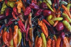 Gorącego chili pieprzu warzywa karmowi Obraz Royalty Free