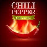 Gorący chili pieprz na czerwonym tle Zdjęcie Royalty Free