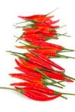 Gorący chilies w odosobnieniu Obrazy Stock