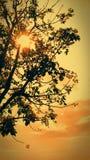 Gorący lato z drzewem Obraz Royalty Free