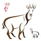 Goral. Silhouette goral on  white background Royalty Free Stock Image