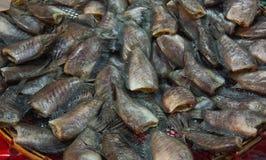 Gorami nero fresco secco dello snakeskin Fotografia Stock Libera da Diritti