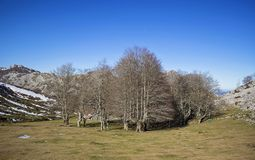 Gorbea natural park. In Vizcaya, Basque Country royalty free stock image