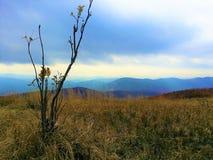 Gorce山 免版税图库摄影