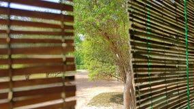 Gordijnen van Bamboe in Sri Lanka royalty-vrije stock foto