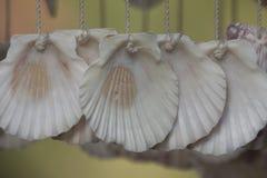 Gordijnen van zeeschelpen Royalty-vrije Stock Afbeeldingen