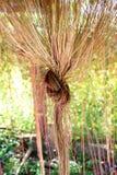 Gordijnenbomen Stock Afbeeldingen
