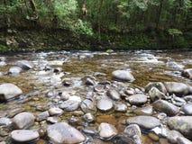 Gordon Dzikie rzeki park narodowy, Tasmania Zdjęcia Stock