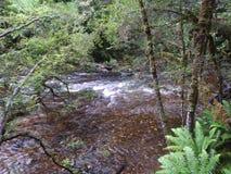 Gordon Dzikie rzeki park narodowy, Tasmania Obraz Royalty Free