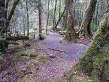 Gordon Dzikie rzeki park narodowy, Tasmania Zdjęcie Stock