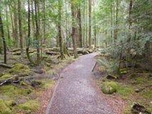 Gordon Dzikie rzeki park narodowy, Tasmania Fotografia Stock