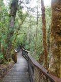 Gordon Dzikie rzeki park narodowy, Tasmania Zdjęcie Royalty Free