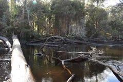 Gordon River Bridge Stock Images