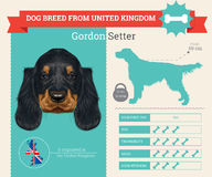 Gordon Setter dog breed infographics royalty free illustration