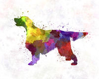 Gordon Setter in watercolor Royalty Free Stock Images
