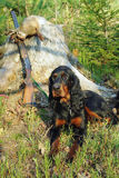 Gordonsetter hunting dog. Resting in the woods during hunting. Dog guard weapon and catch of his master Royalty Free Stock Images