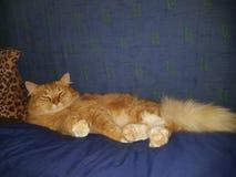 Gordura macia alaranjada do gato preguiçoso Fotografia de Stock Royalty Free