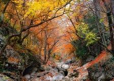 gorge Крыма каньона грандиозный Стоковые Фото