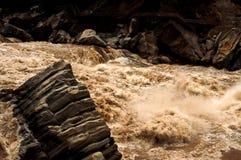 gorge перескакивая тигр Стоковое Фото