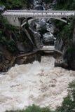 gorge 3 перескакивая тигр Стоковая Фотография RF