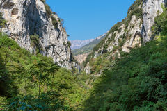 Gorge in the Alpes-Maritimes Royalty Free Stock Image