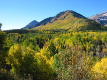 Gorge américaine Utah de fourchette d'automne Photographie stock
