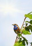 Gorge bleue Image stock