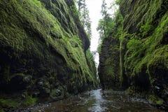 Gorge d'Oneonta Gorge du fleuve Columbia Photos libres de droits